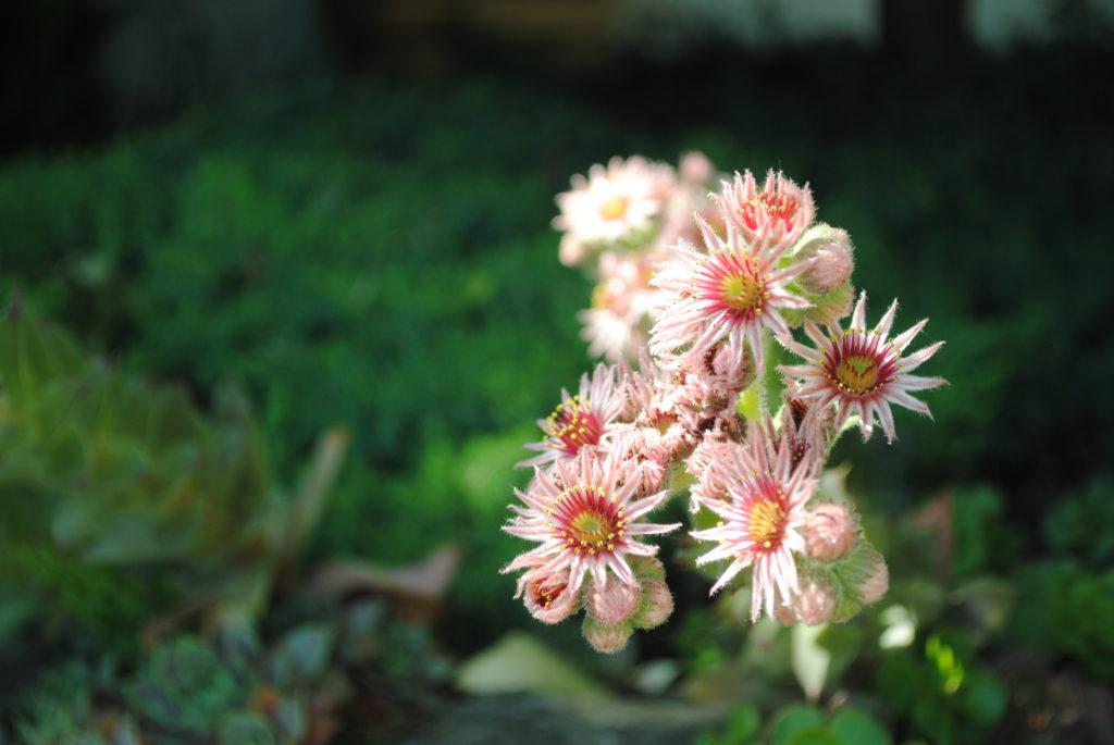 Kwiaty kwitnące w lipcu